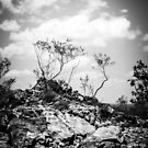 Litchfield Lookout B&W by Candice84