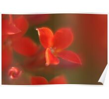Small red flower Poster