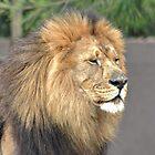 Animals of Africa by Deon de Waal