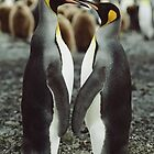 Penguin Love by Steve Bulford