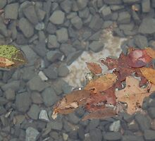 Leaves on the water by slarx