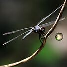Dragonfly's by George  Link