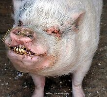 Wilbur the smiling pig by Jamaboop