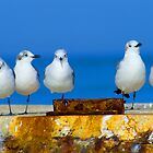 Plovers of Captiva Island by Rich Sirko
