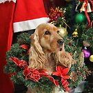 Merry Cocker Christmas by aussiebushstick
