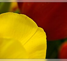 Petals of Perfection by Gayle Shaw