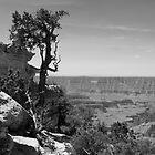 The Grand Canyon by jbmaverick