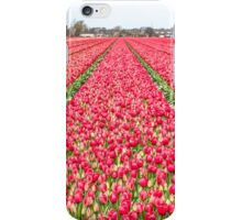 Dutch Tulips part 7 iPhone Case/Skin