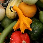 Mixed Gourds by andrea1227