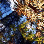 Fall Fern by Allison Lane