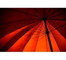 redback spider Photographic Print
