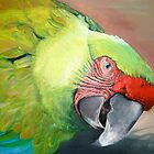 Green Macaw G'Day by Glenda Jones