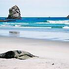 New Zealand Sealion by Allison Lane