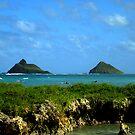 Surfin Flat Island by karolina