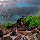 Hanauma Bay Kitty by karolina
