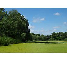 Sunny summer day on  marsh Photographic Print