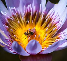 Puny Pollinator by -kugen-
