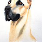 Great Dane by Penny Edwardes