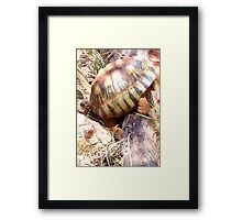 Life's Daily Obstacles Framed Print