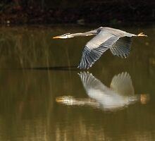 Wing to Wing by Ken Haley
