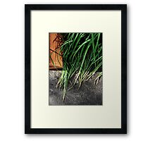 Fading but Unfailing Framed Print