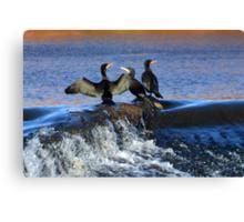 Cormorants at Exeter Quays Devon, UK Canvas Print