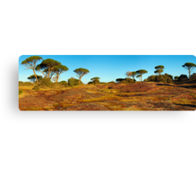 Winter colors in Provence Canvas Print