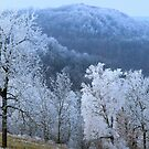 Hoarfrost by NatureGreeting Cards ©ccwri