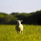 Spring Lamb by LightPhonics