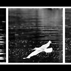 Seagull Triptych by Jonathan Epp