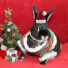 Fudge's First Christmas by AnnDixon