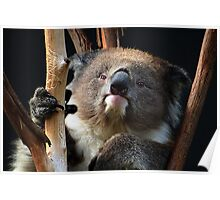 Koala 1 Poster