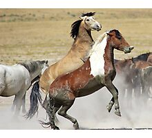 Graceful and Powerful Photographic Print