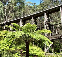 Noojee Trestle Bridge by Rachael Taylor