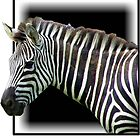 Stripes by gena44