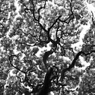 The View Above in Black and White by karolina
