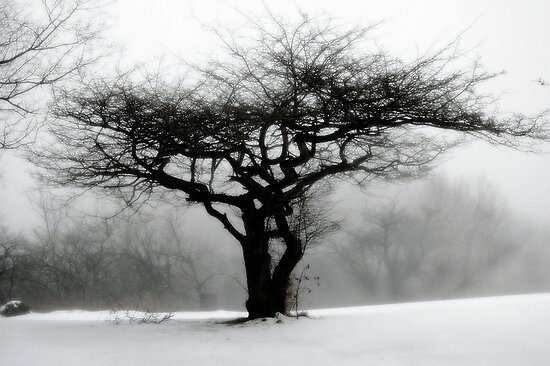 My Neighbor's Apple Tree......... by Glenn-Patrick Ferguson