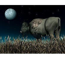 Bison Moon Photographic Print