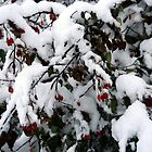 Snow N Berries 1 by Bluemoonshadow