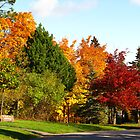 Colours of Fall by Stephen Ryan