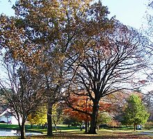 Hoopes Park, Auburn, New York by Mary Ellen Tuite Photography