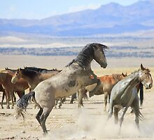 Dances with Hooves by Gene Praag