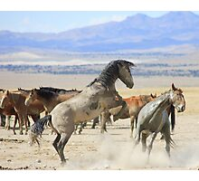 Dances with Hooves Photographic Print