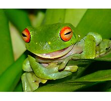 The Talking frog Photographic Print