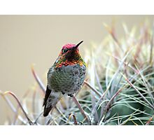 Sherbert Colored Hummer Photographic Print