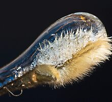Pussy Willow Icicle ! by robkal