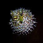 fish by edwardfish