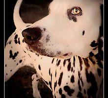 Dotty by PhotoBull