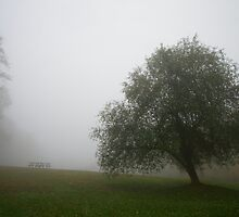 Misty Morning by Armando Martinez