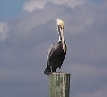 pelican on hwy 11 by sherrikl